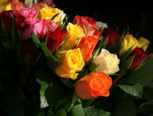 roses-1367182-m