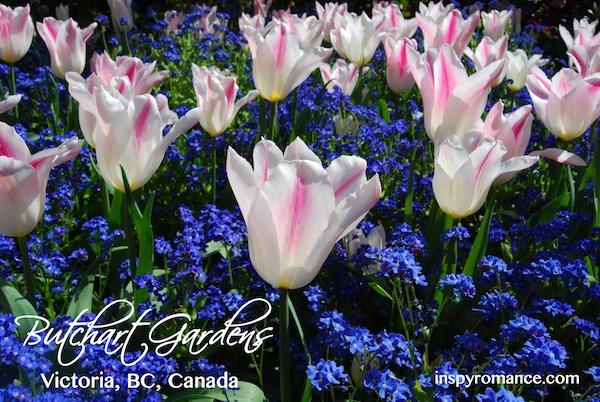 tulips, butchart gardens, valerie comer