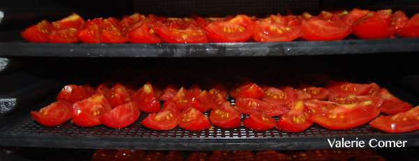 Valerie's Tomatoes in the Dehydrator