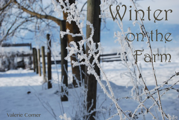 Valerie Comer, Snowflake Tiara, winter
