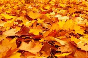autumn-84714_640