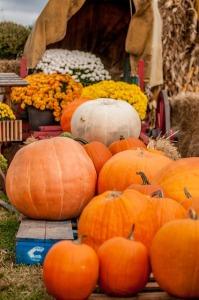 pumpkins-218190_640