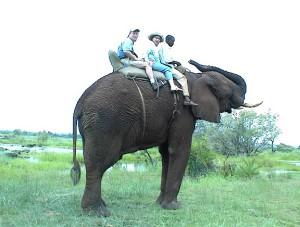 4. Where love resides - Elephant