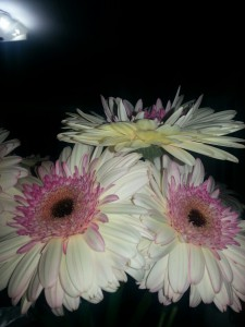 flowersinkitchen