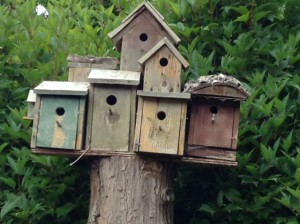 Bird houses OR Garden