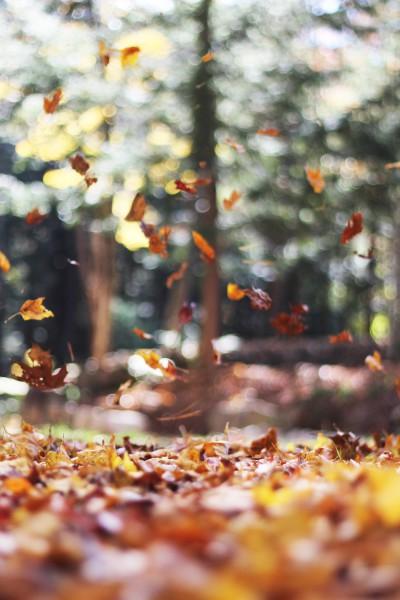 falling leaves unsplash