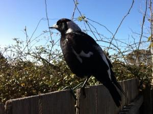 No_Beaky (2)