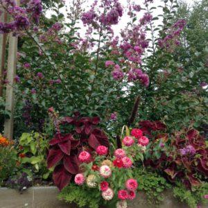 Flower Box OR Garden