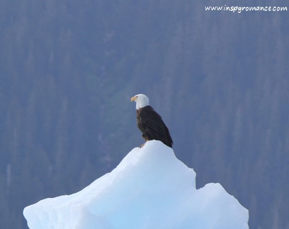 eagle on iceberg