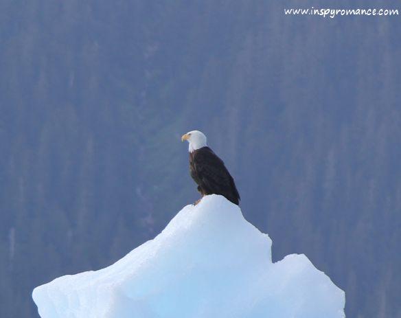 eagle on iceberg