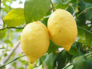 lemon-1117568_1920