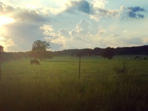 Texas backroads cows & clouds - Jolene Navarro