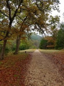 Thanksgiving in the Texas Hill Country