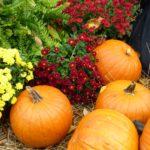 Thanksgiving …..   Roxanne Rustand