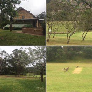 Kangaroos at Mulgoa in Sydney, Australia at #Omega16