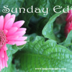 Sunday Edition – June 25, 2017