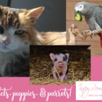 Piglets, puppies, and parrots? Pets and romance!
