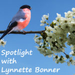 Spotlight: Soft Kisses and Birdsong by Lynnette Bonner