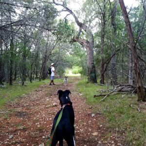 Walking the Texas Hill Country