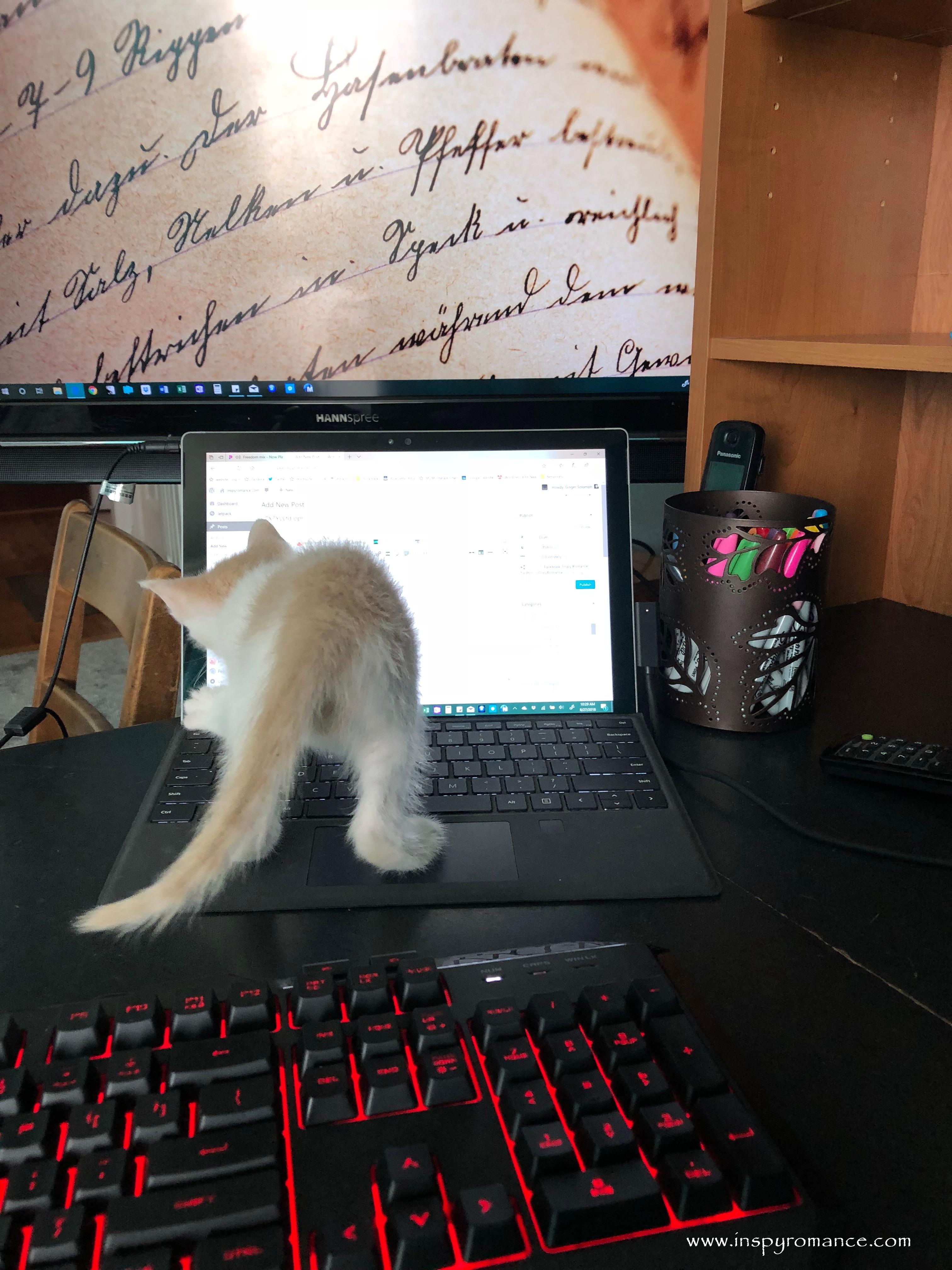 computer kittenIR