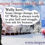 On Changing Seasons and Big Life Events